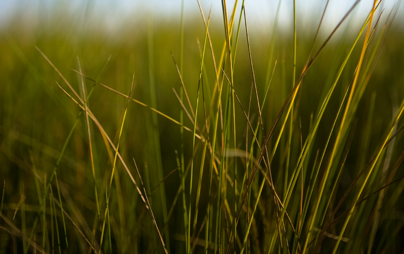 coastal grass texture